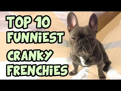 Cutest Relationship French Bulldog And Baby Videos Compilation ...