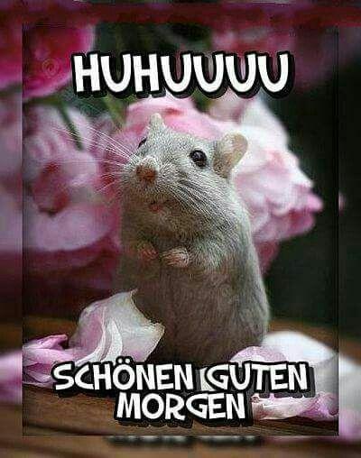 Pin Von Elke Krämer Auf Guten Morgen Grüße Guten Morgen