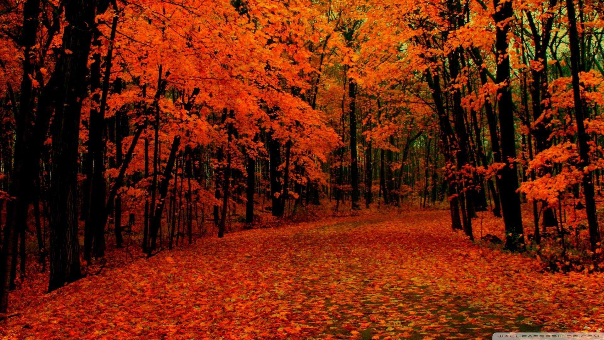 1920x1080 Wallpaper Fall Path Wallpaper 1080p Hd Upload At February 2 2014 By Fall Background Images Fall Wallpaper Autumn Leaves Wallpaper