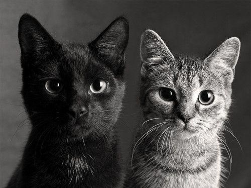 Sweet little black kitten is always first, always the trendsetter.