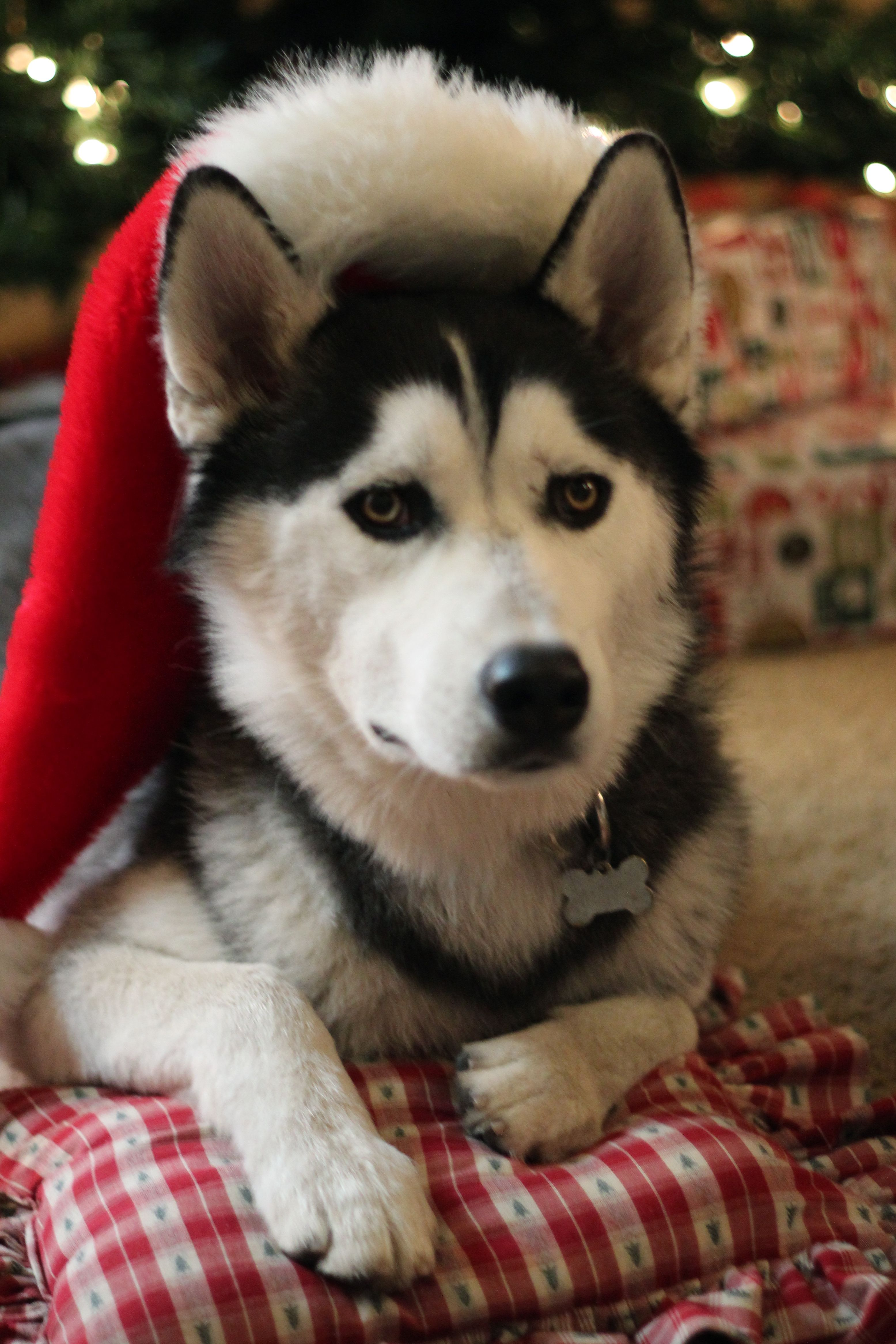 Goku At Christmas Less Than A Year Till He Is All Mine Cute