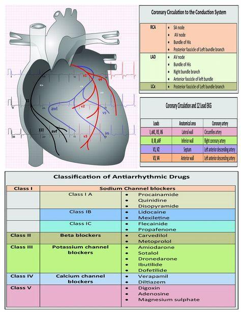 12 Lead EKG Pocket Card: APRN World: 9781941004067: Amazon ...