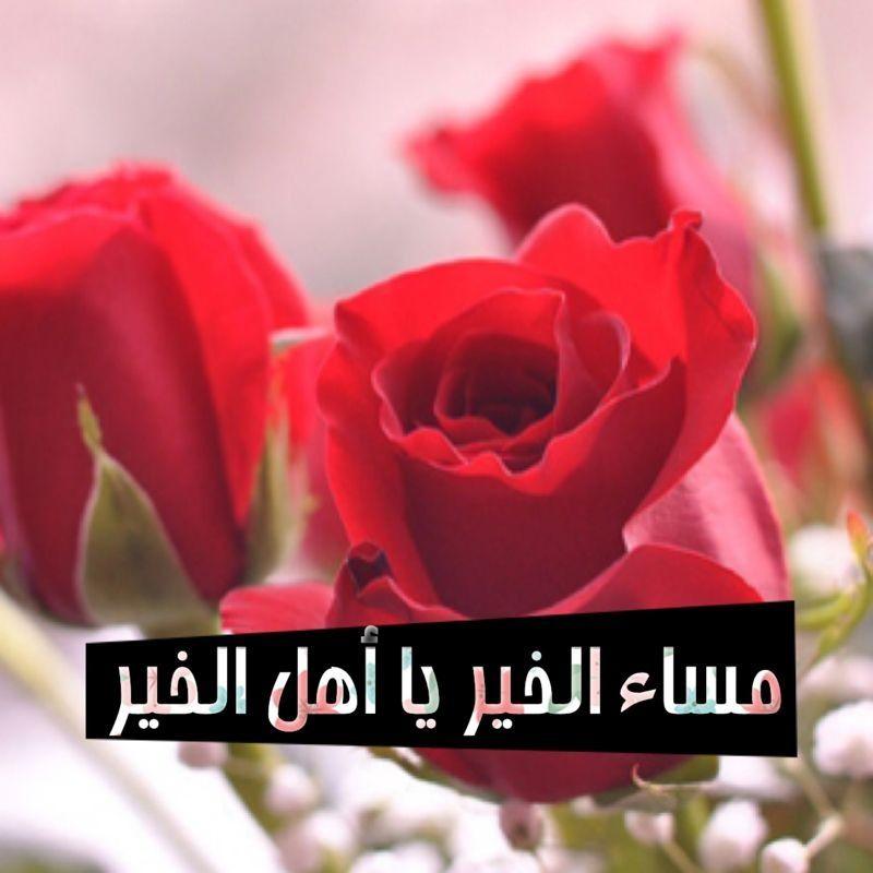مسائيات Rose Flowers Plants