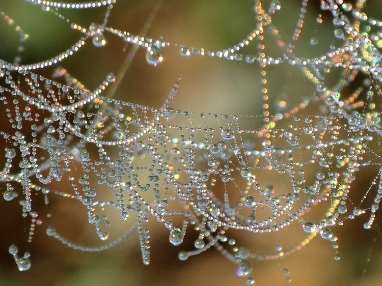 Ceveneth's Woodland Realm : spider web dew droplets magical!