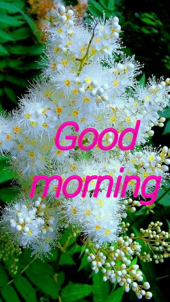 Good Morning Svanya Good Morning Pinterest Morning