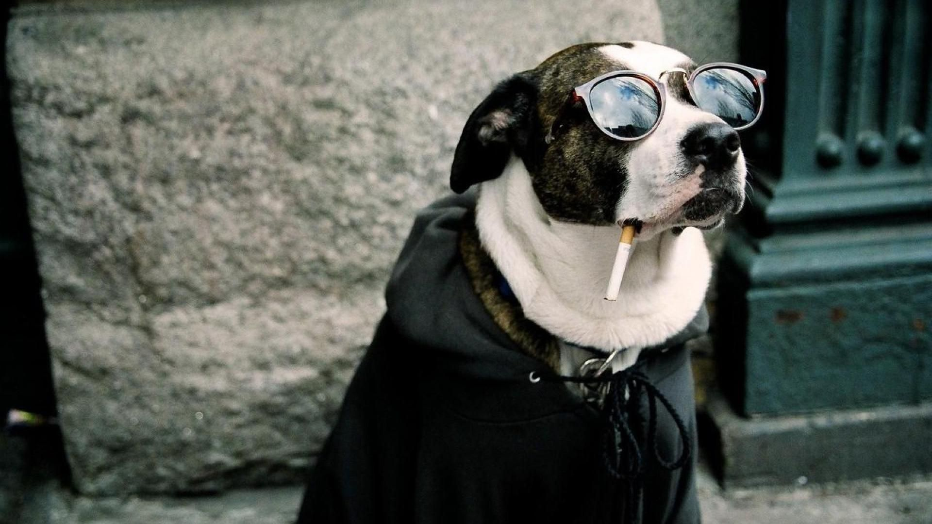 hipster dog. yes! | animals (^•^) | pinterest | funny animal, hd