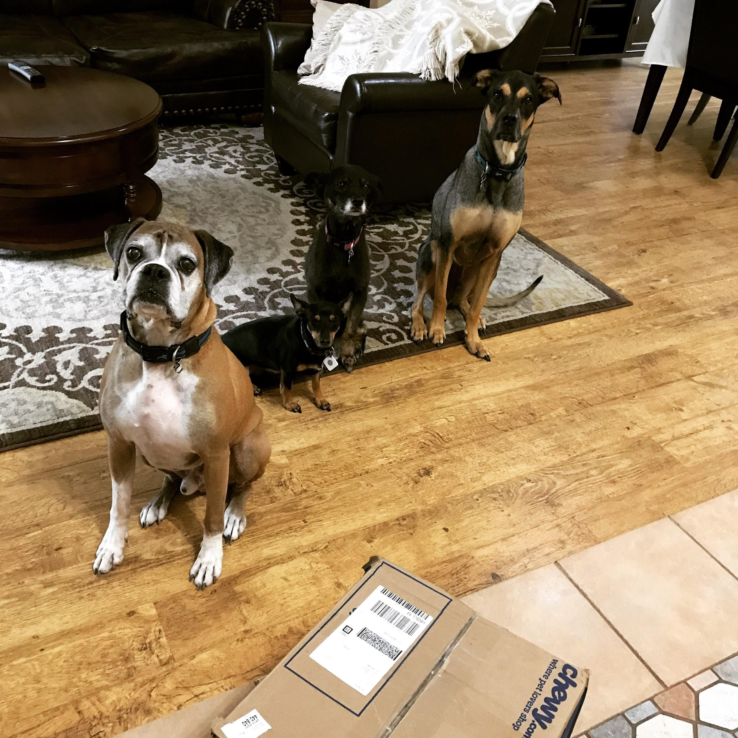 Well behaved doggos http://ift.tt/2sDuygJ