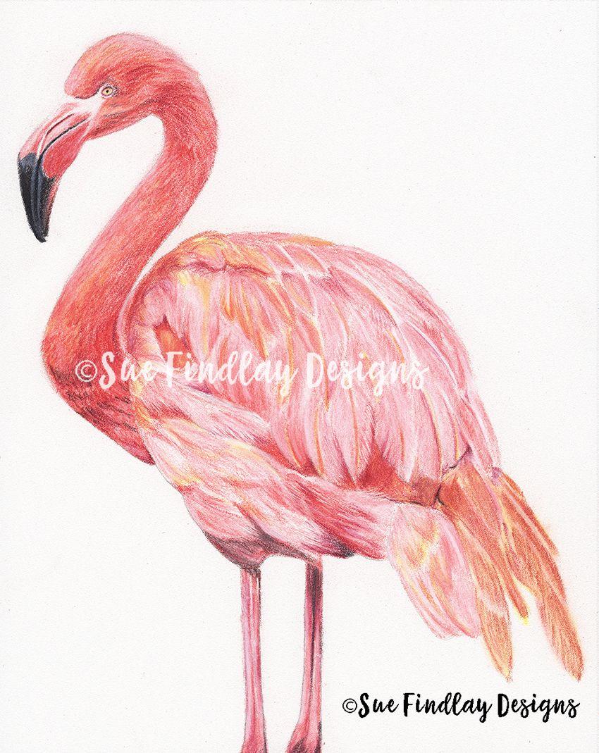 Flamingo pastel pencils pencil drawings pencil drawings