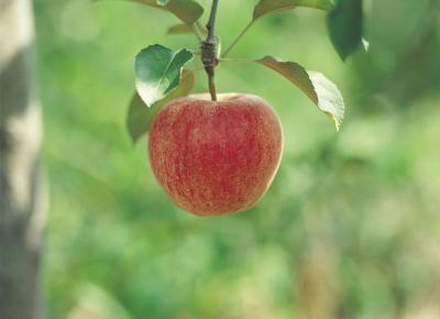 How To Get Rid Of Apple Scab Apple Tree Apple Plant Honeycrisp Apple Tree