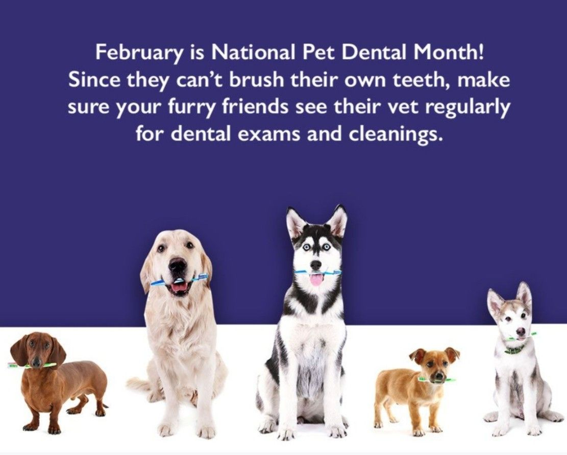 Https Www Ebrahimidds Com In 2020 Pet Dental Month Dental Facts Furry Friend