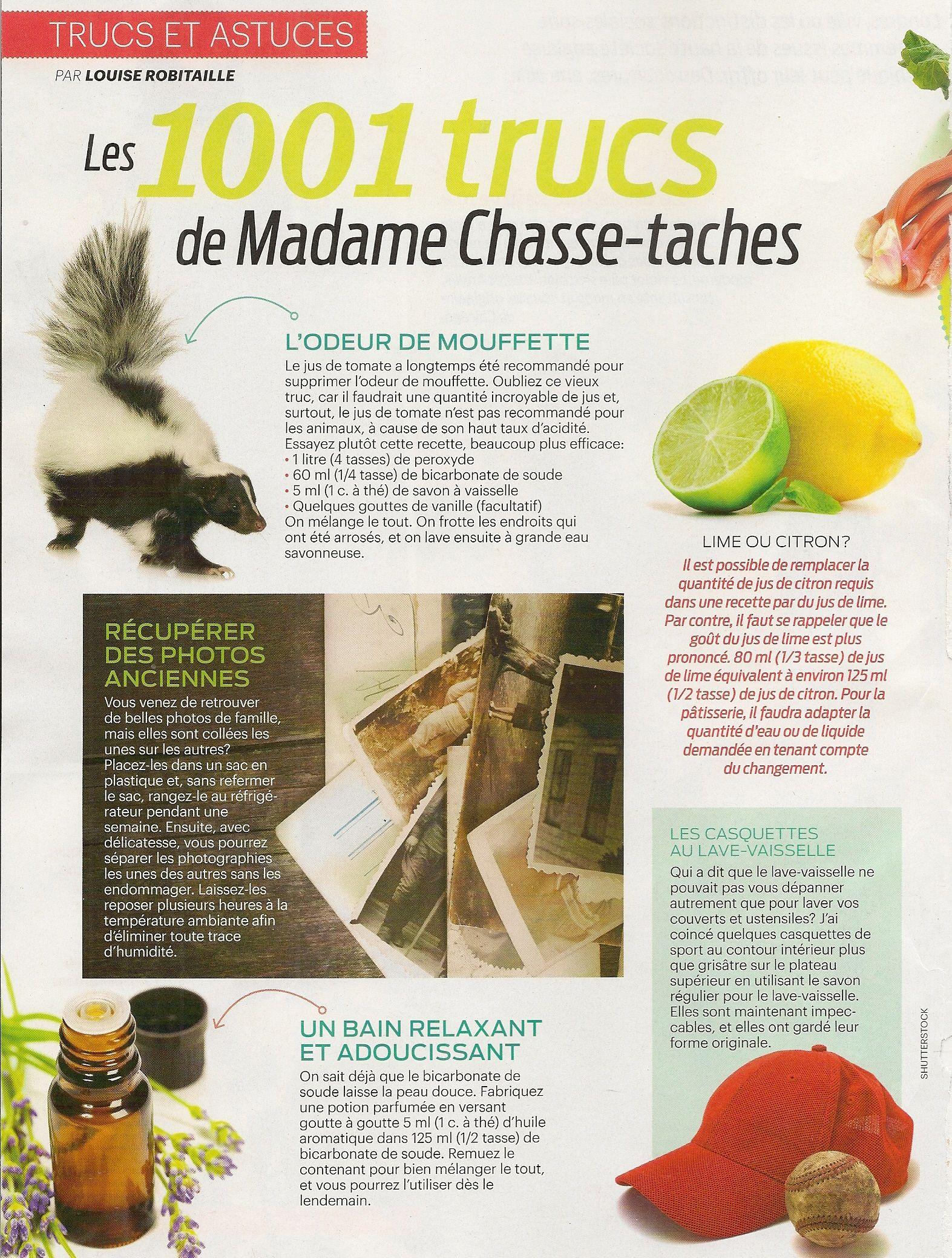 Savon Sans Odeur Pour La Chasse trucs et astuces: l'odeur de mouffette - 2 pages - frawsy