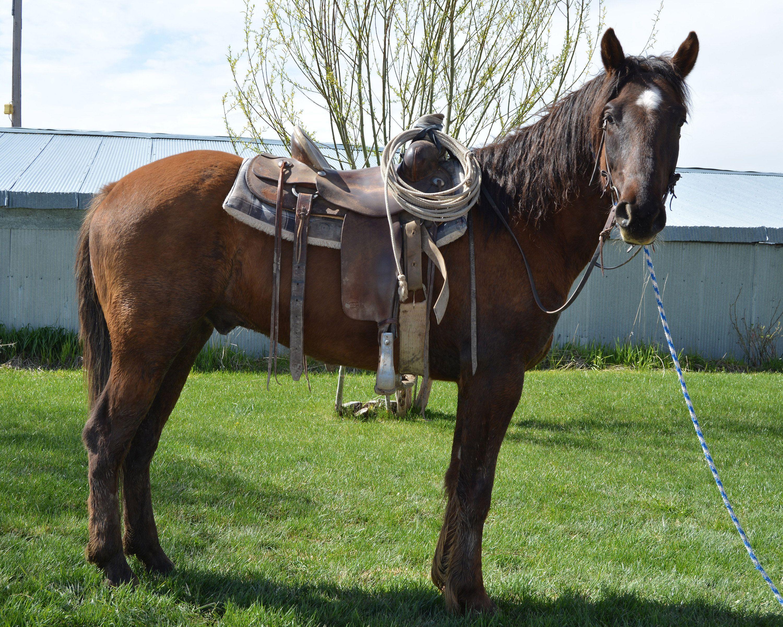 Wild Horse Adoption May 20 Horse adoption, Horses, Wild