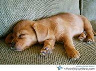 da puupppy=]