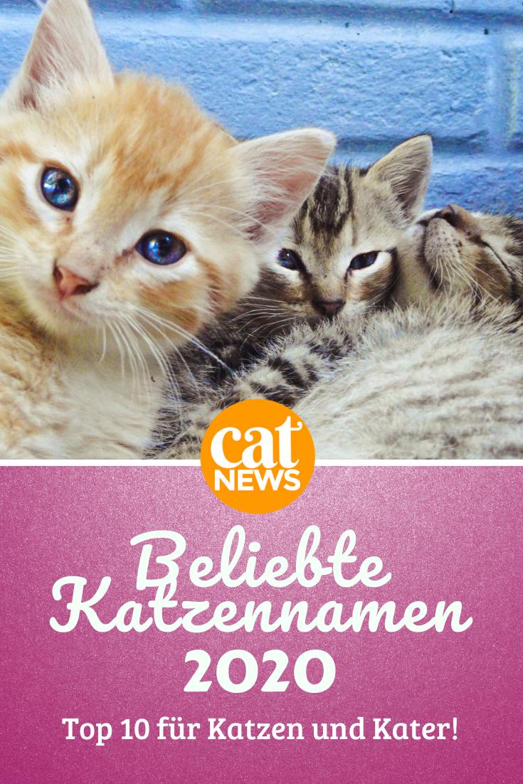 Die Beliebtesten Katzennamen Fur 2020 In 2020 Katzen Namen Beliebte Katzennamen Katzen
