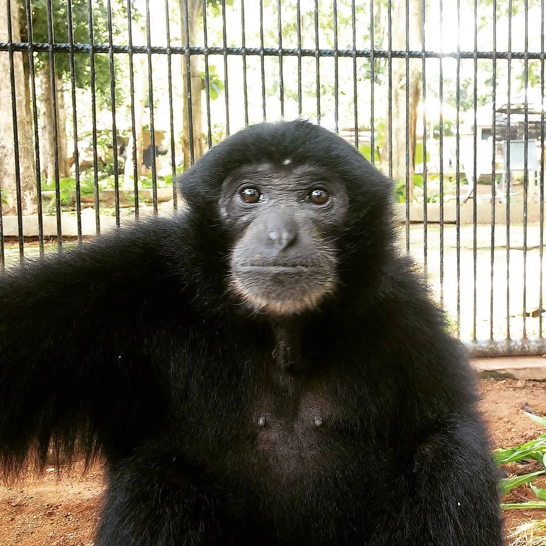 selfie #simpanse #monkey #animaladhilman | animal planet
