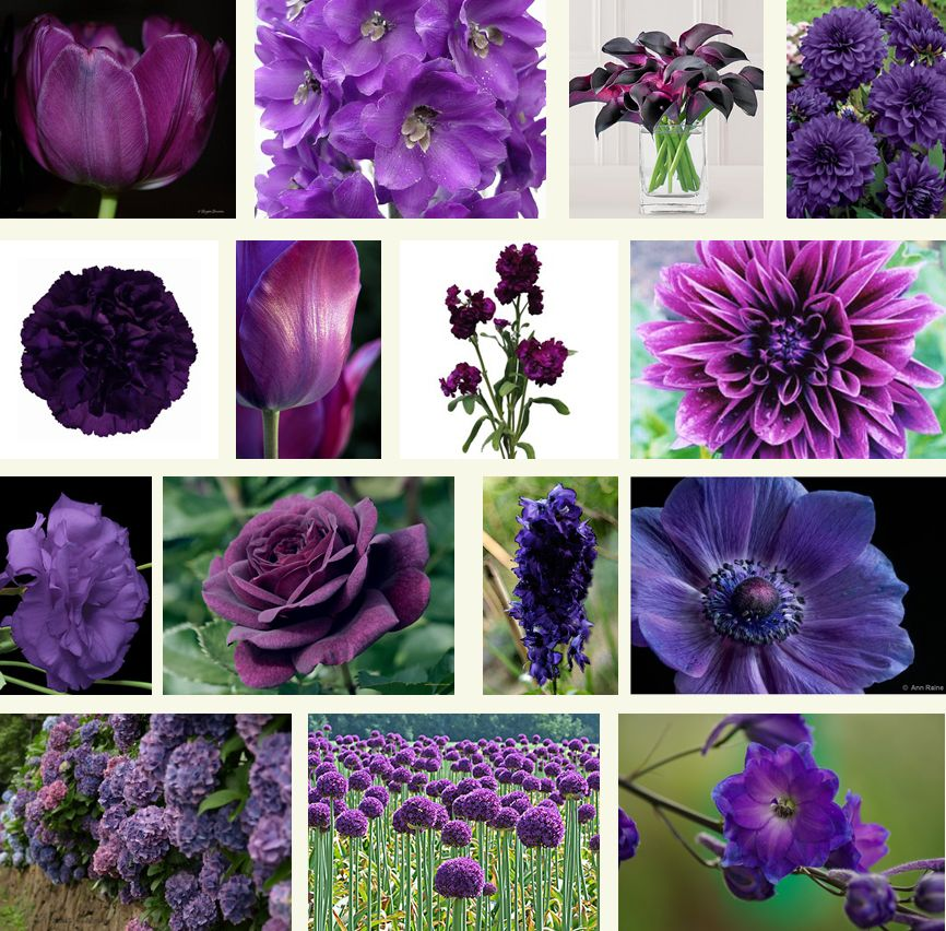Diffe Shades Of Purple Colour Yahoo Image Search Results