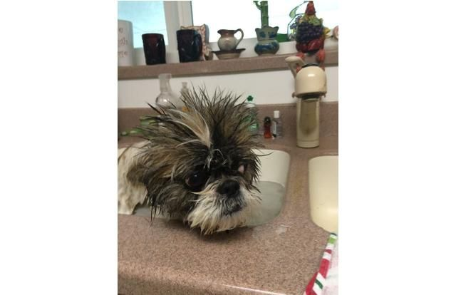 27 Hilariously Sad Dogs Who Do Not Want A Bath (Slide #4) - Pawsome