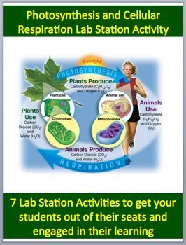 Cellular respiration and photosynthesis 7 engaging lab station this fully editable lab station activity on cellular respiration and photosynthesis is meant to get your students out of their seats and engaged in the fandeluxe Gallery