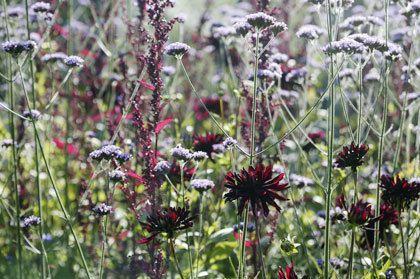 Op zoek naar informatie over plantensoorten?