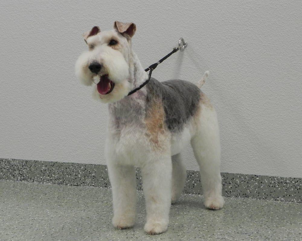 Photo of Shear Art Pet Salon - Cathedral City, CA, United States ...