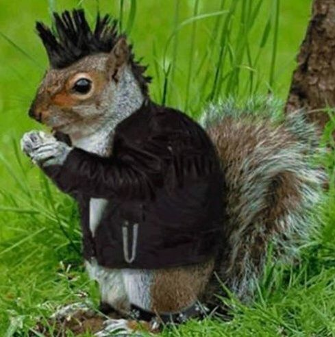 Jeri G On Squirrel Funny Squirrel Cute Squirrel