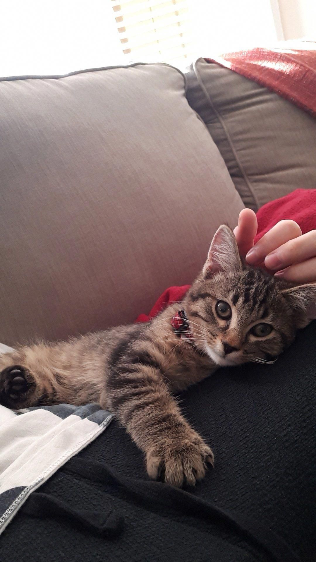 After Moving Out Of My Parents And Suffering 4 Months Of Cat Withdrawals We Adopted Rengar Kediler Ve Yavrulari Sevimli Kopek Yavrulari Sevimli Kedi Yavrulari
