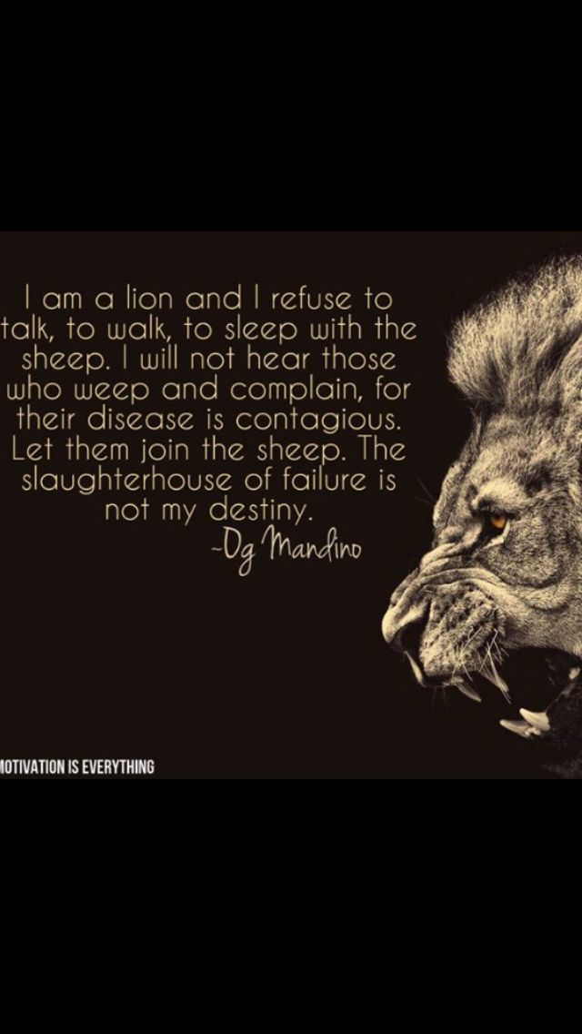 This Lion Doesn T Lose Sleep Over The Opinion Of Sheep Don T