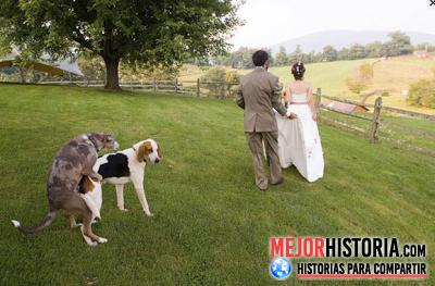 El dia de tu boda... ese momento único e irrepetible en el que todo el mundo esta guapísimo, perfecto y todo debe salir bien: vestido, peinados, el ...