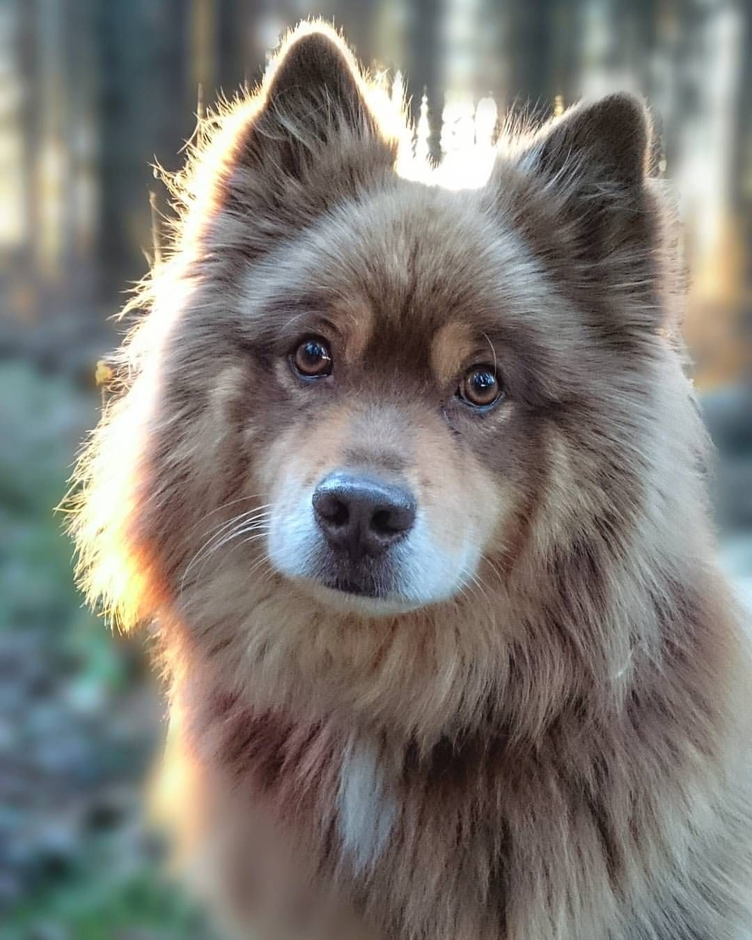 Yet Another Example Of Why I Love Big Furry Dogs Animals Pinterest Dogs Puppies And