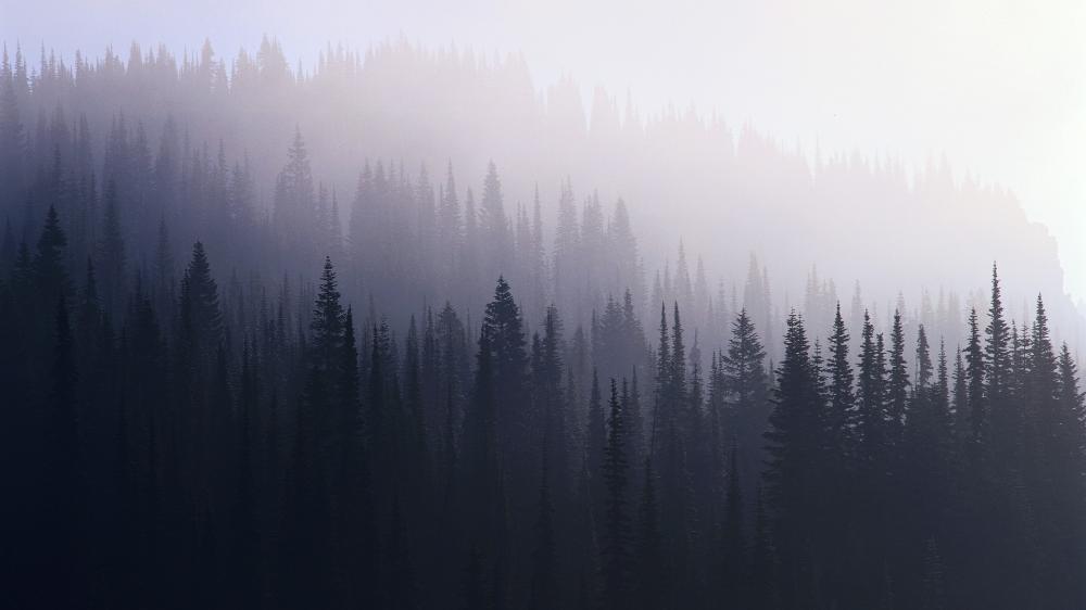 82 Indie Desktop Wallpapers On Wallpaperplay Forest Wallpaper Forest Pictures Nature Wallpaper