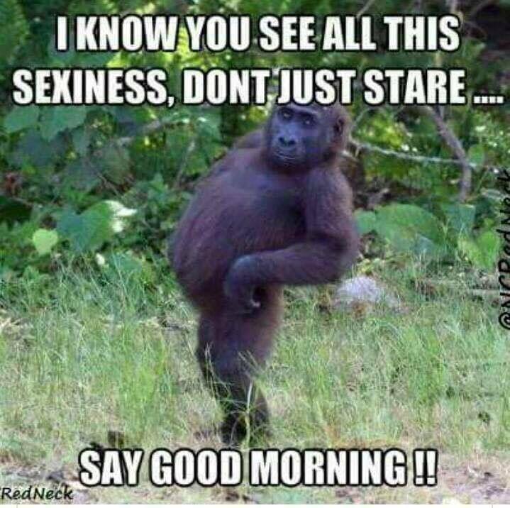 Good Morning Funny Good Morning Memes Morning Quotes Funny Good Morning Funny