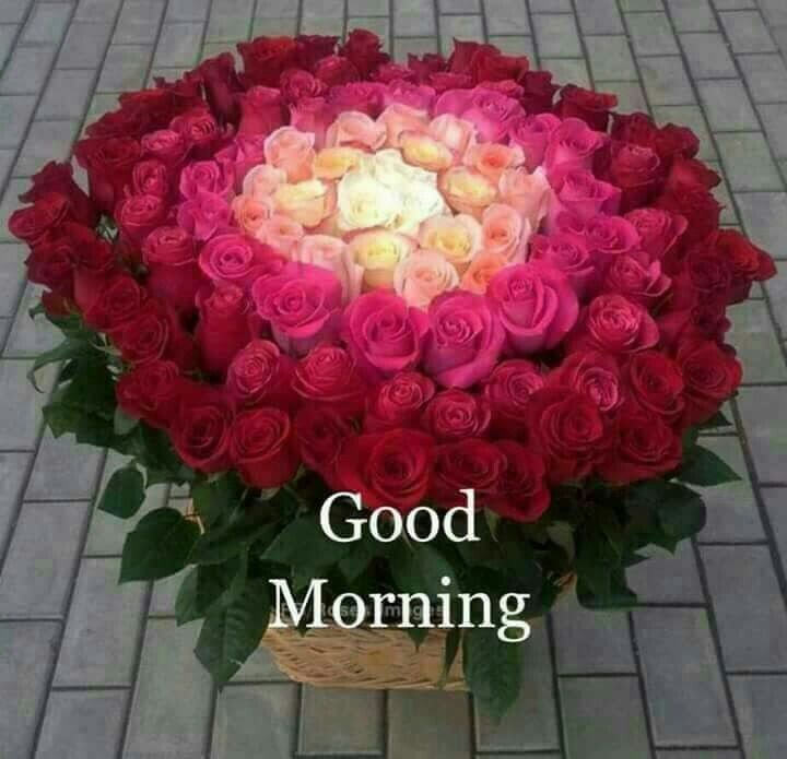 Good Morning Search Quotes 26174 Good Night Quotes Friday Morning