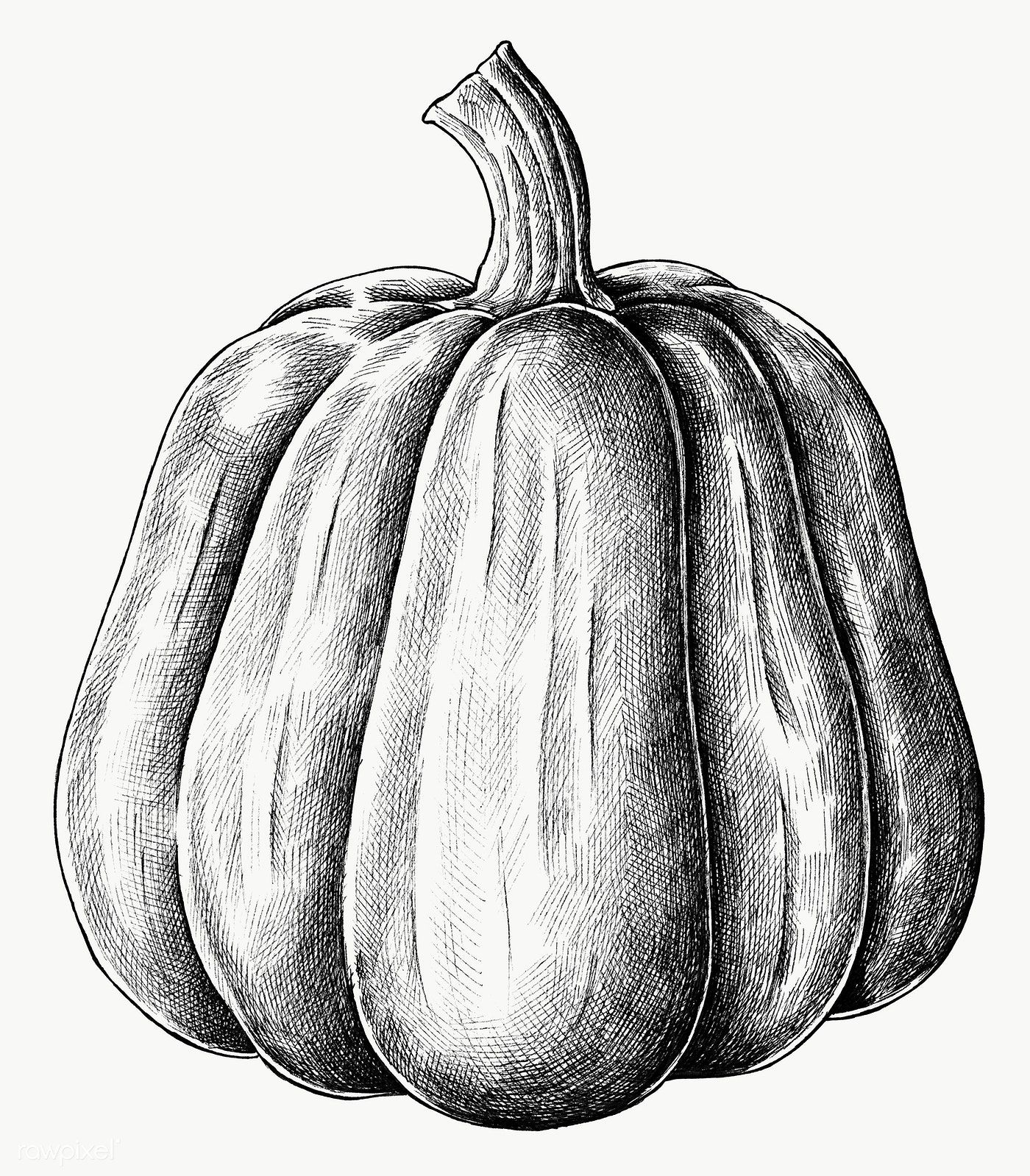 Hand Drawn Fresh Pumpkin In Black And White Transparent Png Free Image By Rawpixel Com How To Draw Hands Pumpkin Vector Pumpkin Illustration