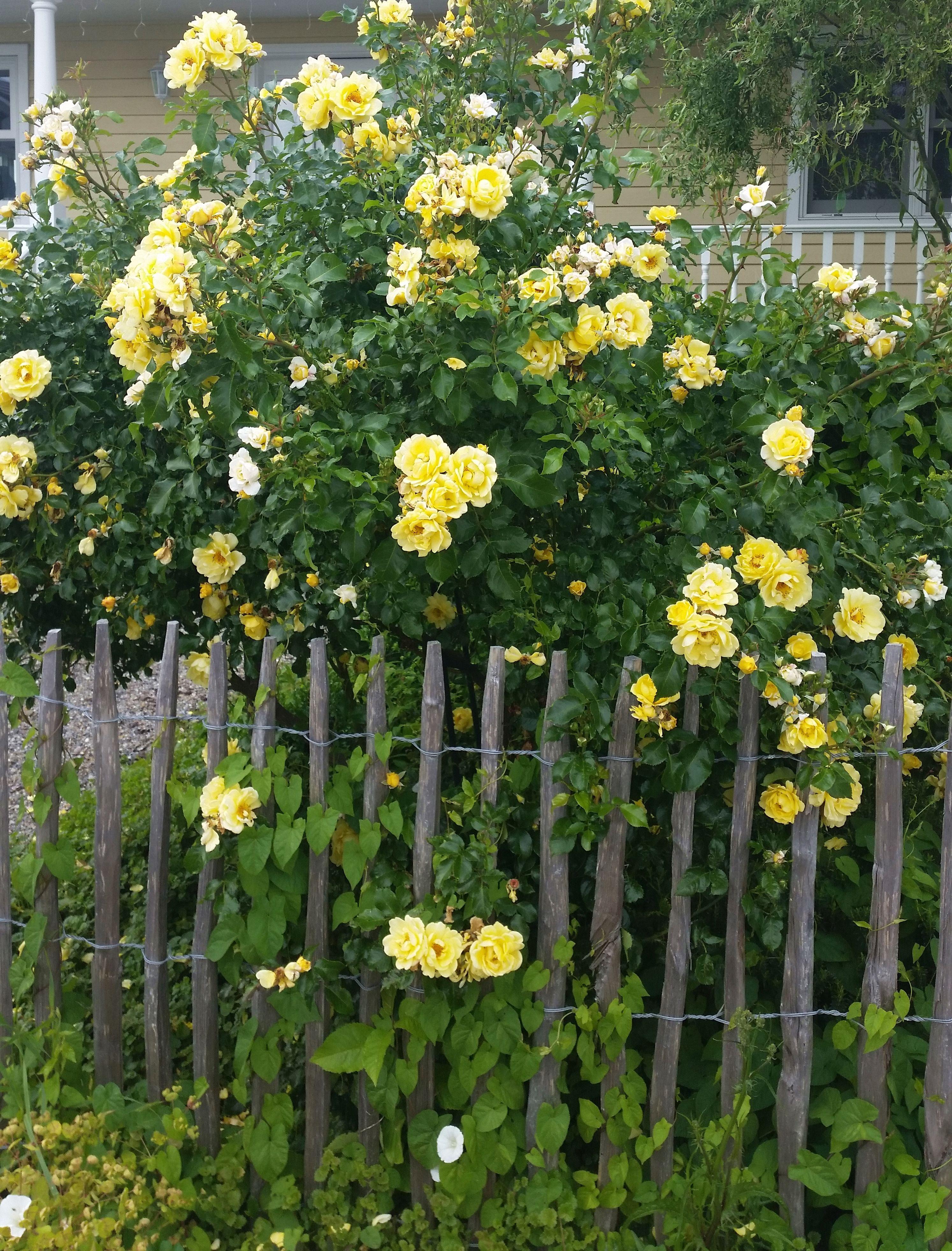 Wundervoll Zaun Aus ästen Selber Bauen Dekoration Von Ratgeber Tipps Zum Selberbauen. Der Natürlich Schöne
