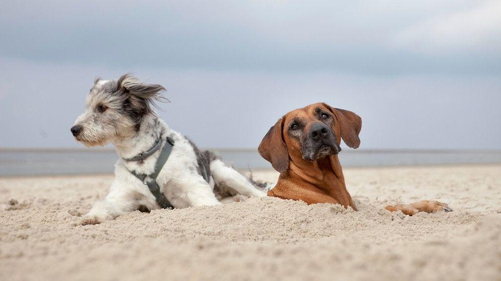 Urlaub mit Hund: So werden die Ferien auch für Ihren Hund schön