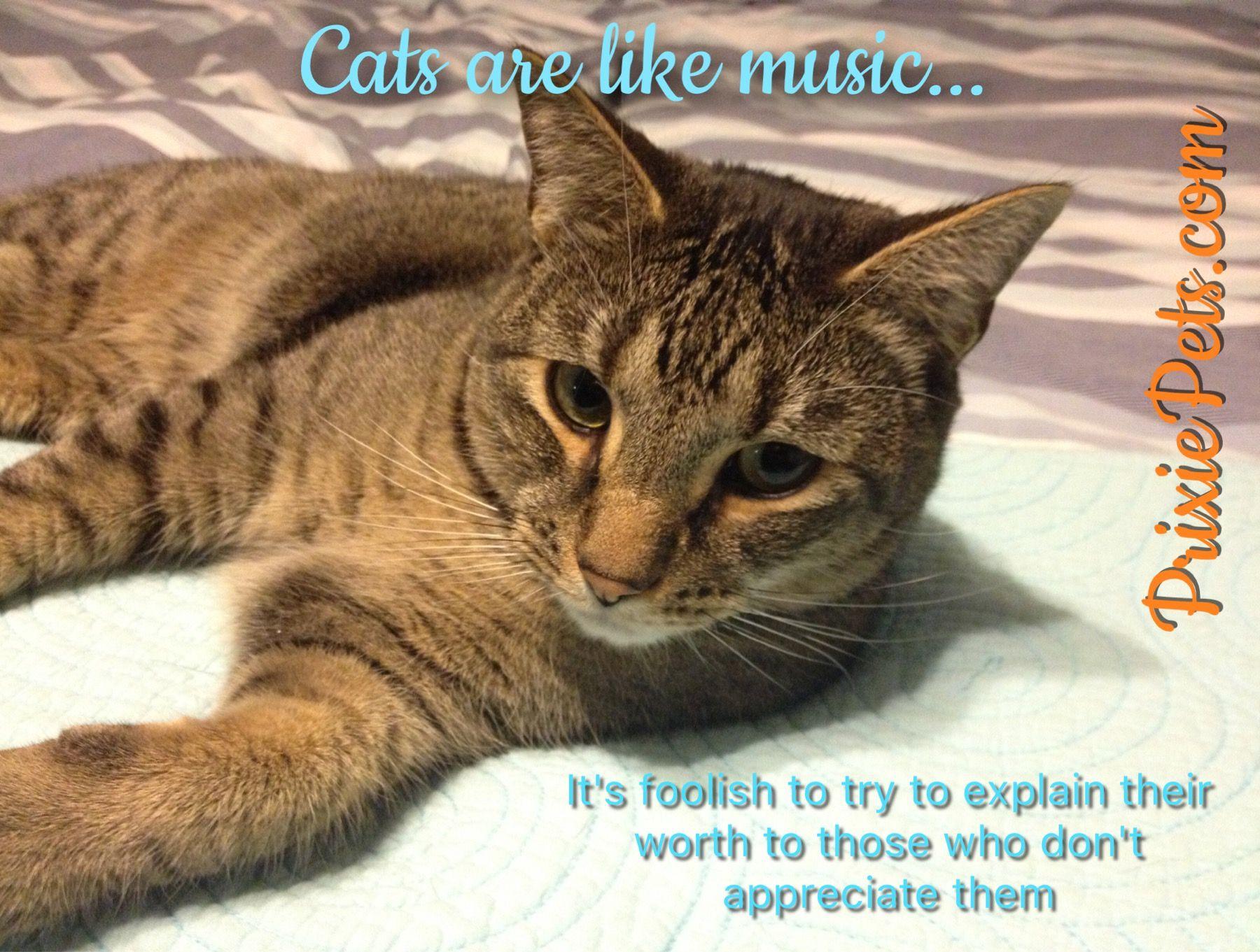 Our Favorite Cat Quotes! | Cute cat memes, Cat love quotes ...