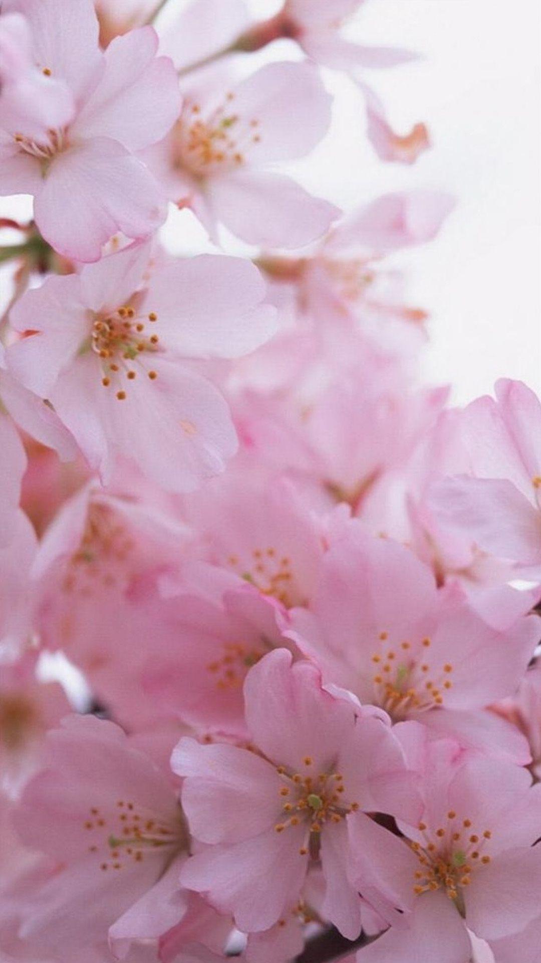 Pink Flower Bunch Macro iPhone 8 Wallpapers Весна цветение