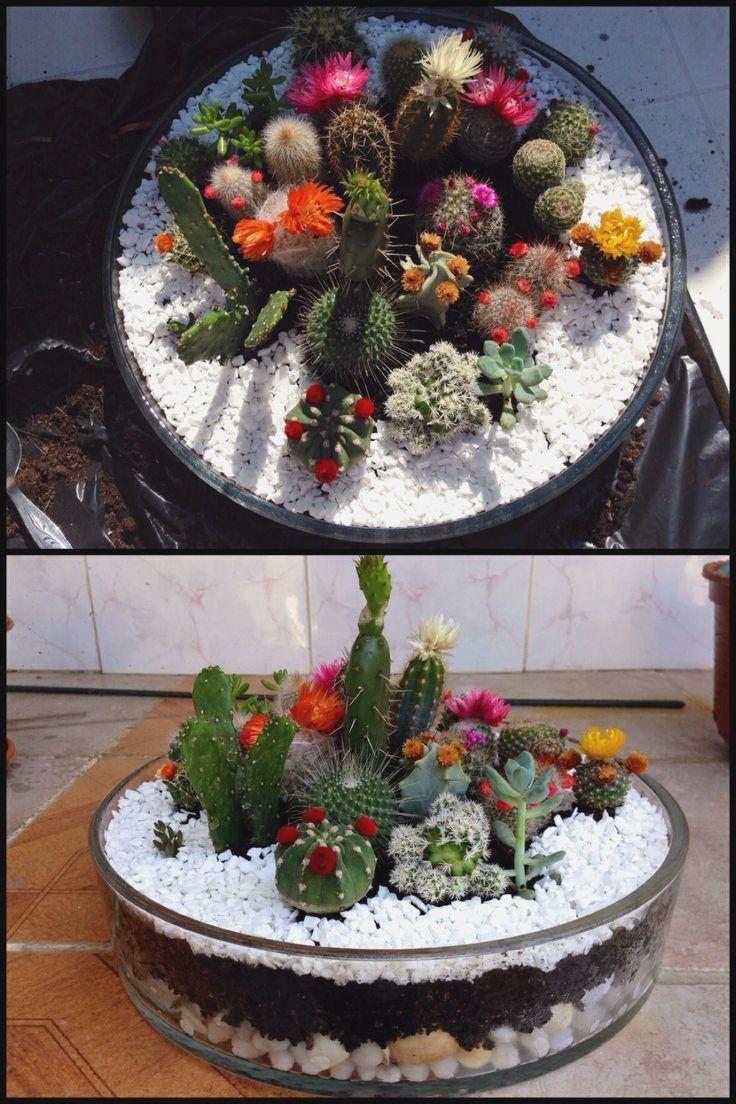 small cactus garden design more picture small cactus garden design please visit wwwinfagar