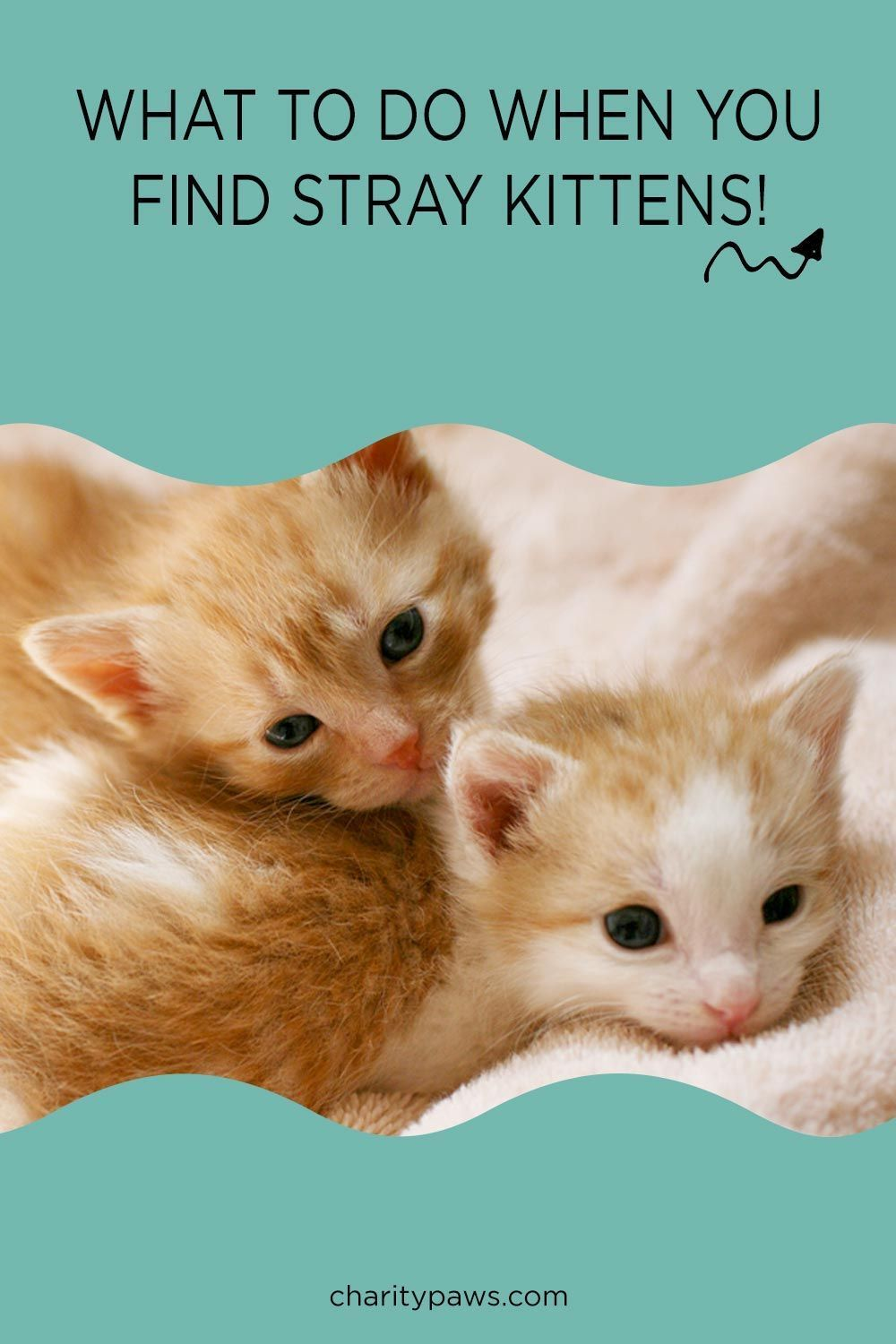 Pet Animal Rescue News Stories Reviews Charitypaws In 2020 Kittens Animal Rescue Animals