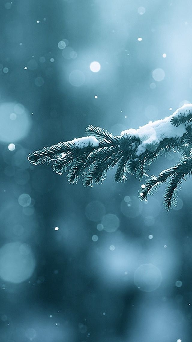 Winter Season Snow Trees Lens Flare IPhone 5s Wallpaper Download