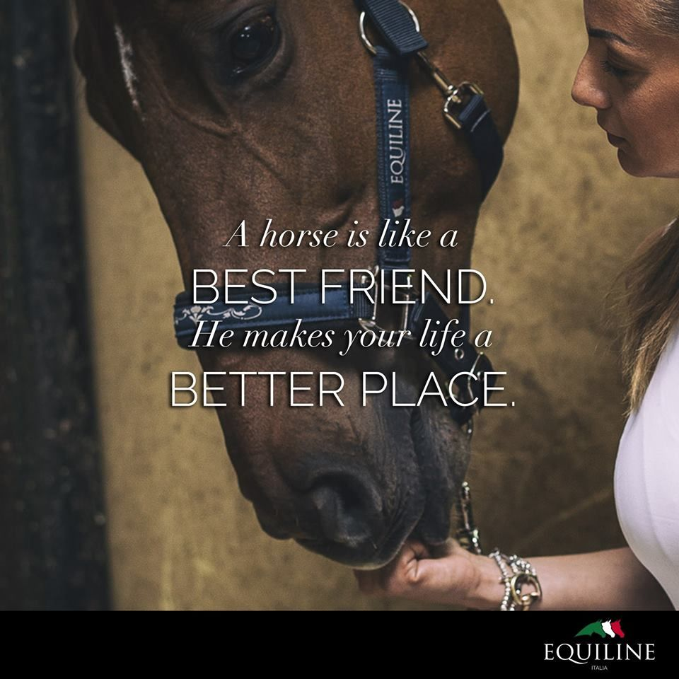 A Horse Is Like A Best Friend He Makes Your Life A Better Place  E D A Equiline Quotes