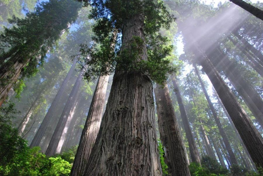 Damnation Creek Trail, Redwood National Park