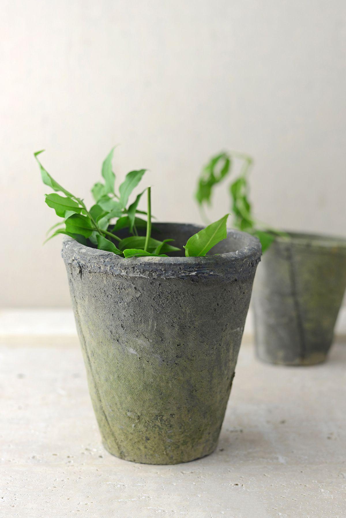 Homespun Cement Pot 5 3 4 Inch Cement Pots Flower Pots Cement Flower Pots