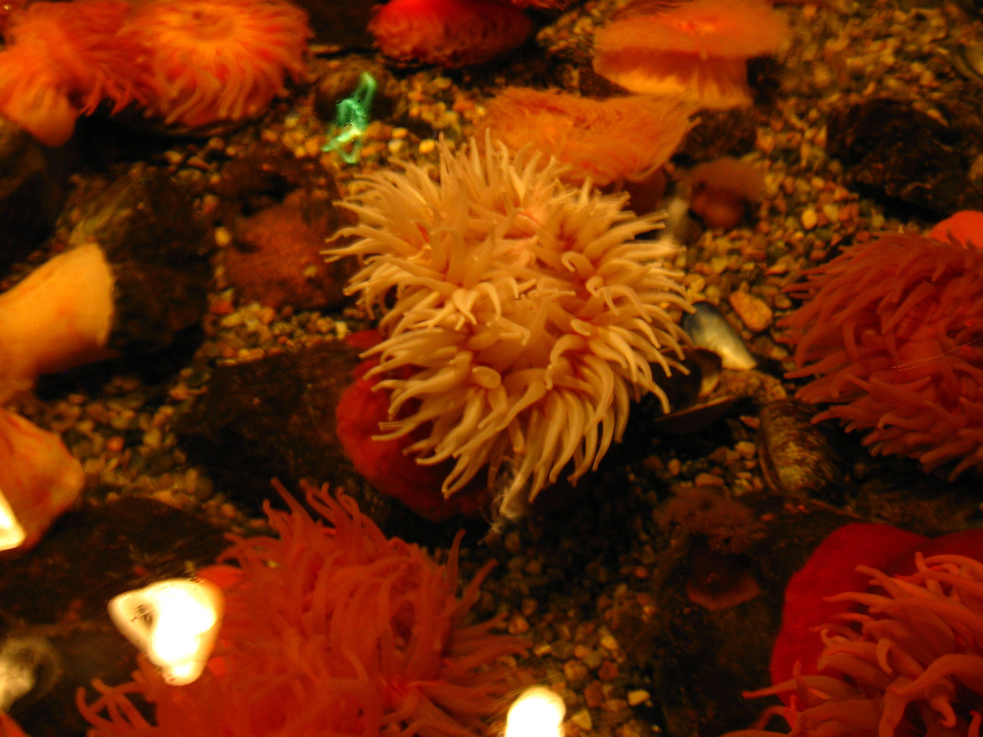 Anemone pool mystic aquarium ct nature pinterest mystic aquarium