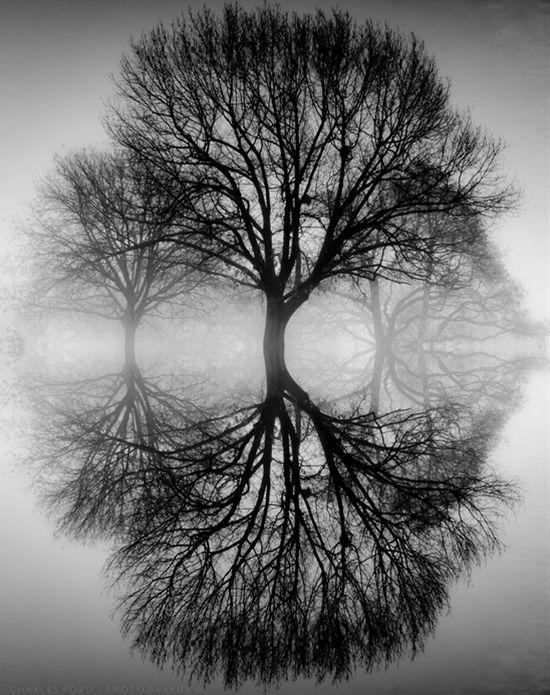 Ansel Adams: Fotografo conocido por las fotografias en blanco y ...