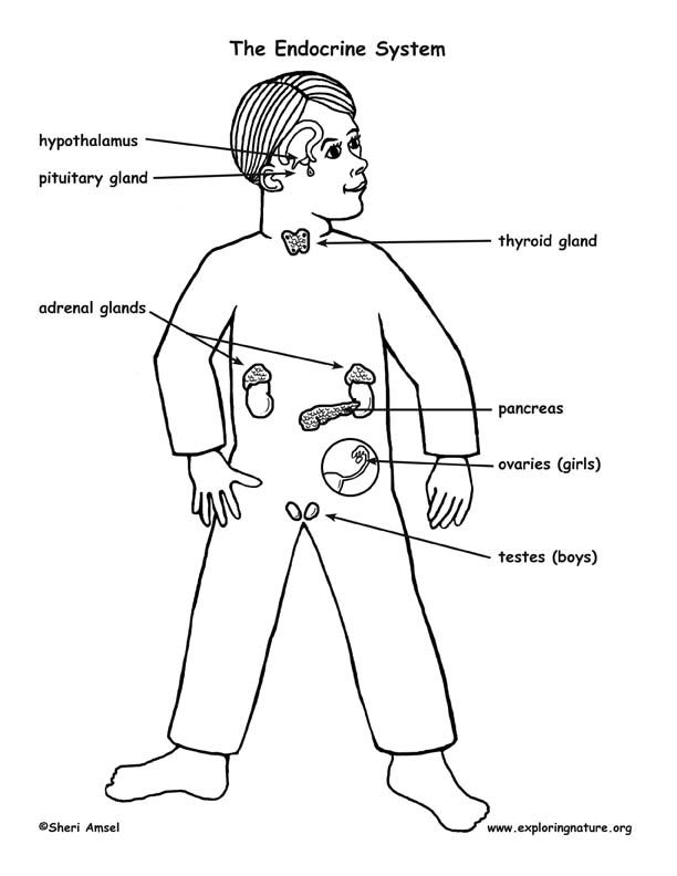 Pin On Biology Human Body Anatomy Genetics