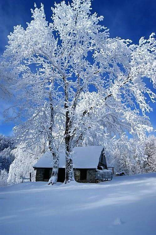 Follow Pinterest Nedym24 Nature Photography Cool Color Follow4follow Beauty Beautiful Winter Pictures Winter Scenery Winter Landscape
