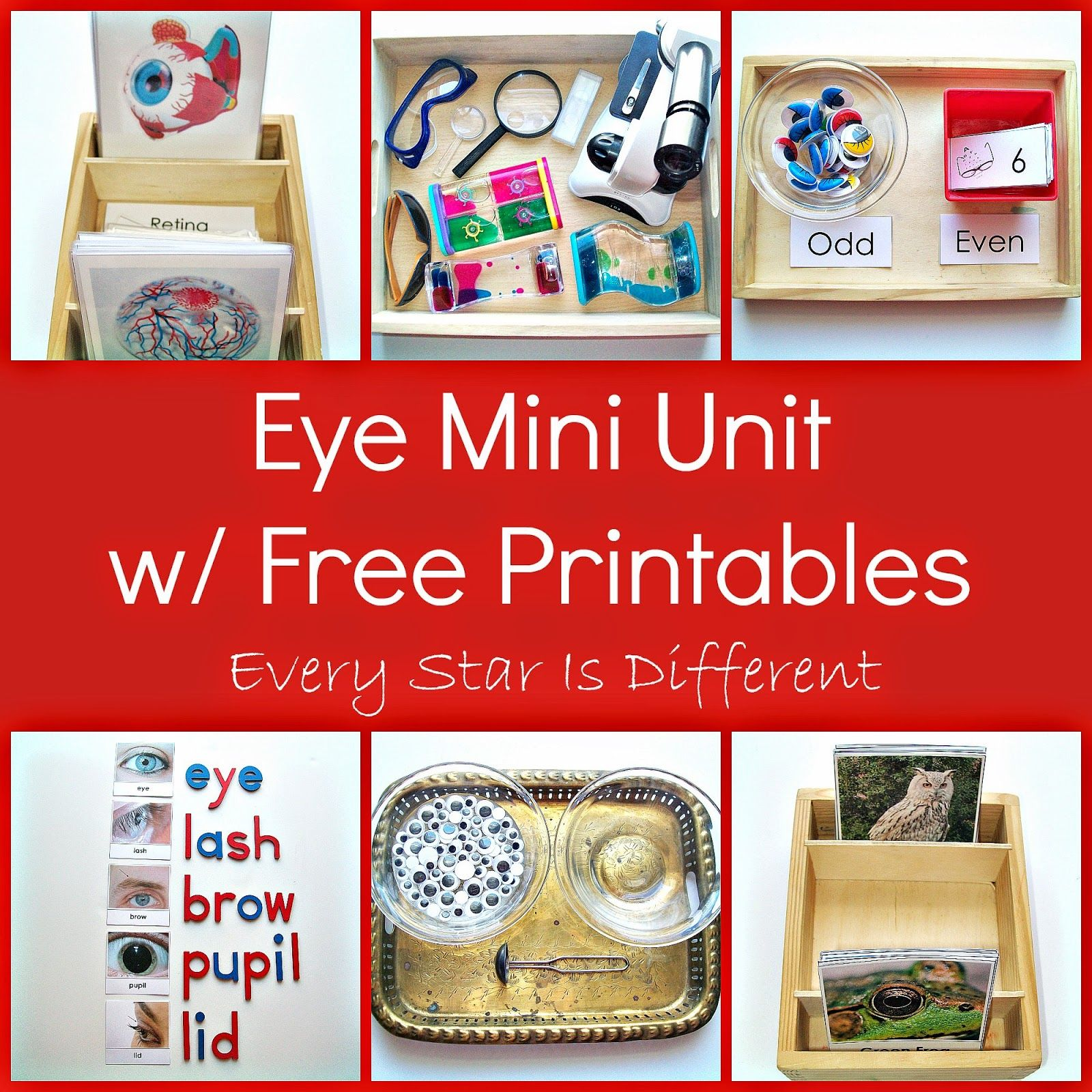 Every Star Is Different: Eye Mini Unit w/ Free Printables