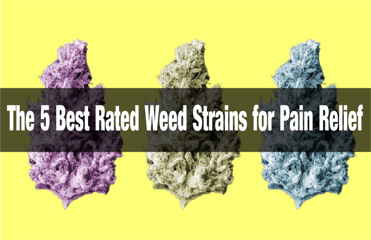 The 5 Best Rated Weed Strains for Pain Relief