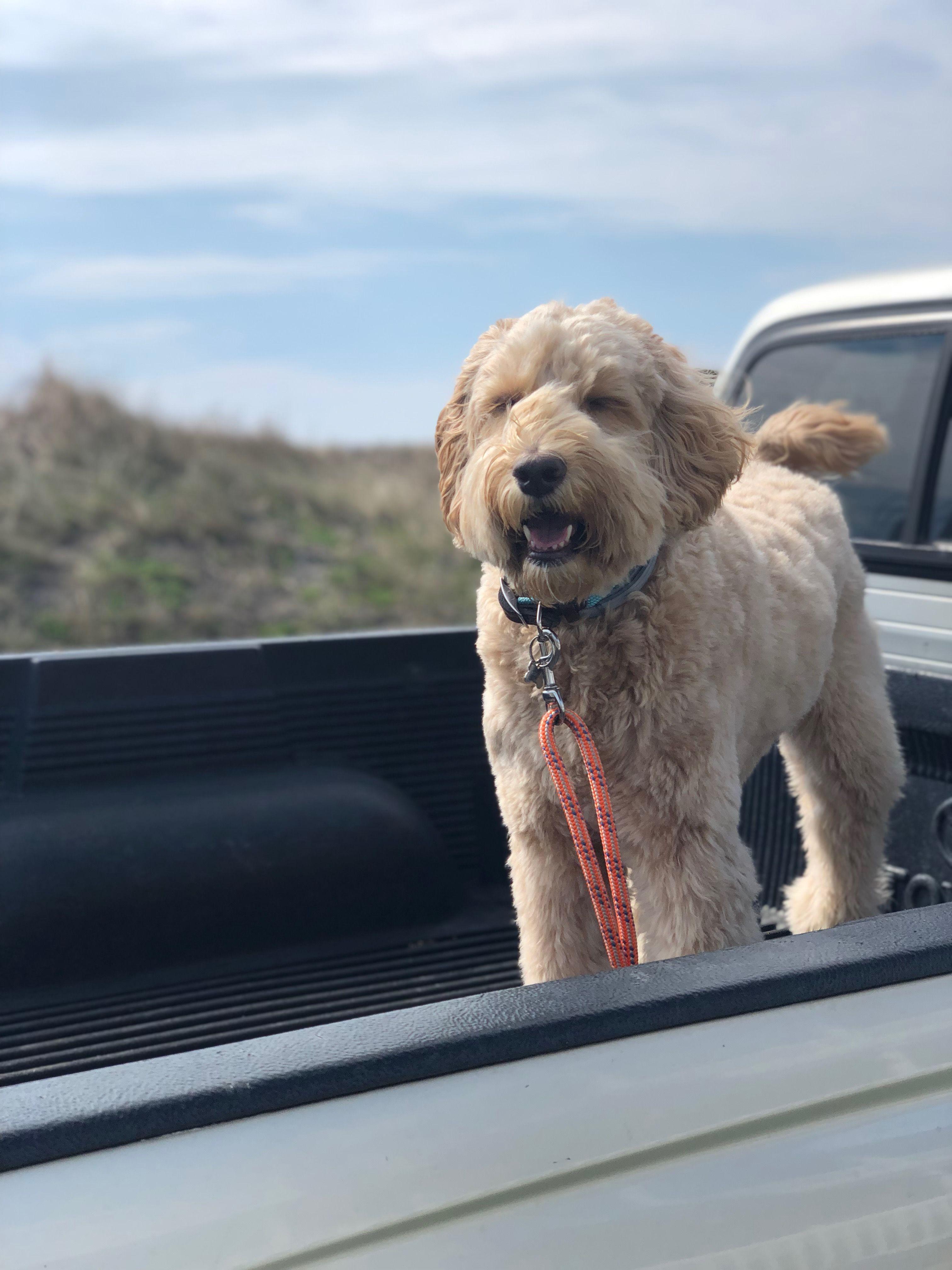 Rope Leash Dogs Girl Dog Dog Leash